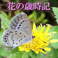 花の写真とイラスト